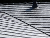 sidney-Oxford-Metal-Roof-122